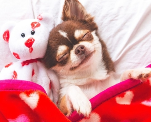 eco friendly pet blanket