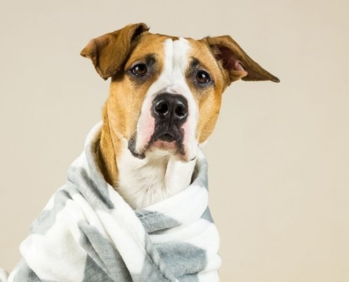 Pet Fleece Blanket 3SIXTY